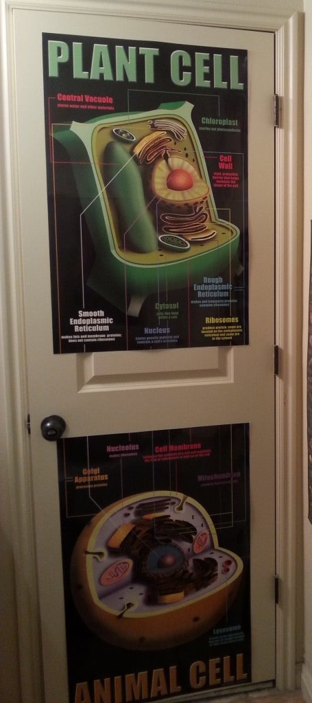plant and animal cell posters